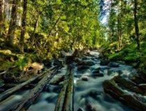 북유럽 10일(산림/임업)